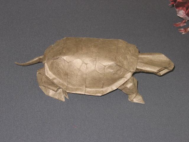 Western Pond Turtle (Robert Lang)