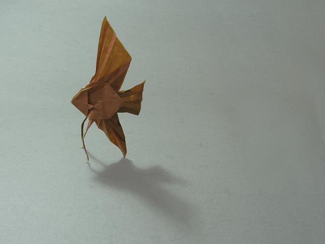 Veiltail Angelfish Satoshi Kamiya