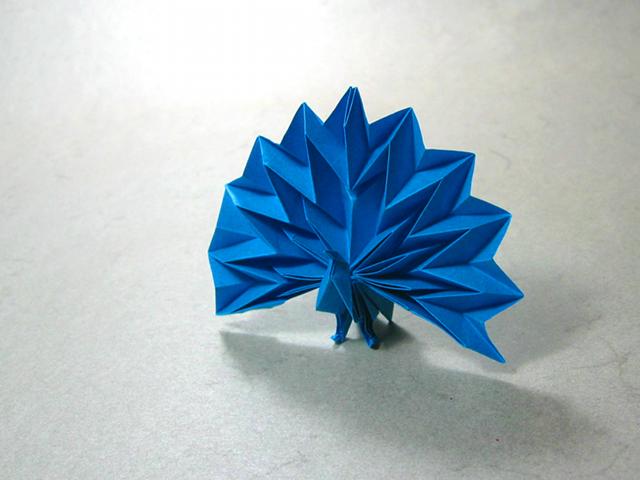 Peacock Jun Maekawa