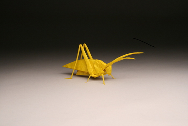 Katydid HP, opus 629 designed and folded by Robert Lang